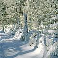 Snowy Footpath In Winter Wonderland by Heiko Koehrer-Wagner