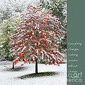 Snowy Maple With Buddha Quote by Heidi Hermes
