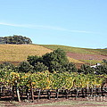 Sonoma Vineyards - Sonoma California - 5d19307 by Wingsdomain Art and Photography