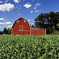 Soybean Field And Red Barn Near Anola by Dave Reede