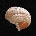 Space Brain by Richard Newstead