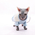 Sphynx Hairless Cat. by With love of photography