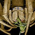 Spider Eating A Fly, Sem by Volker Steger