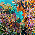 Spotted Goldring Surgeonfish And Coral by Beverly Factor