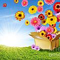 Spring Delivery by Carlos Caetano