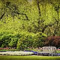 Spring Garden by Cheryl Davis
