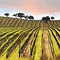 Spring Vineyard by Sharon Foster
