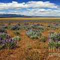 Springtime In Honey Lake Valley by James Eddy