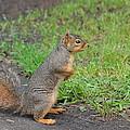 Squirrel by Linda Larson