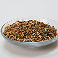 St Johns Wort Dried Herb by Photo Researchers, Inc.