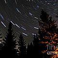 Star Trails Above Spruce Tree Line by Darcy Michaelchuk
