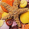 Starfish and seashells  Print by Garry Gay