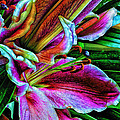 Stargazer Lilies Up Close And Personal by Bill Tiepelman