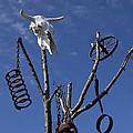 Steer Skull In Tree by Garry Gay