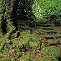 Steps In The Wild Garden, Galnleam by The Irish Image Collection