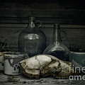 Still Life With Bear Skull by Priska Wettstein
