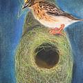 Streaked Weaver bird