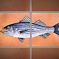 Striped Bass by Andrew Drozdowicz