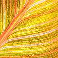 Striped Leaf Print by Bonnie Bruno