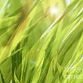 Summertime Green by Ann Powell