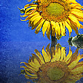 Sunflower Reflection by Andee Design