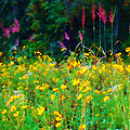 Sunflowers And Grasses by Judi Bagwell