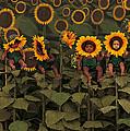Sunflowers by Anne Geddes
