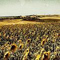 Sunflowers Field  by Anja Freak