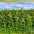 Sunflowers In France by Joan  Minchak