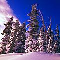 Sunrise Over Snow-covered Pine Trees by Natural Selection Craig Tuttle