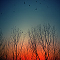 Sunset Behind Trees by Luis Mariano González