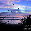 Sunset Down Under by Karen Lewis