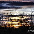 Sunset Grasses by Sandra Cockayne