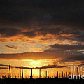 Sunset On The Vineyards by Nancy Chambers