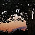 Sunset Over A Witness Tree by Dave Sandt