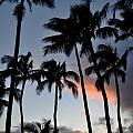 Sunset Palms Print by Kelly Wade