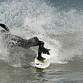 Surfing 396 by Joyce StJames