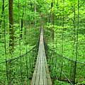 Suspension Bridge by Daniel Muller