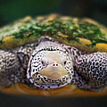 Swimming Turtle Facing Camera by Greg Adams Photography