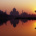 Taj Mahal & Silhouetted Camel & Reflection In Yamuna River At Sunset by Richard I'Anson