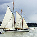 Tall Ship Tacoma Print by Bob Christopher