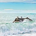 Tasman Sea by MotHaiBaPhoto Prints