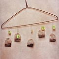 tea bags Print by Priska Wettstein