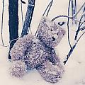 Teddy In Snow by Joana Kruse
