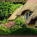 Thatched Cottage With Pink Flowers by Carla Parris