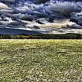 The Cattle Farm by Douglas Barnard