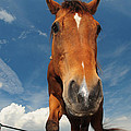 The Curious Horse by Paul Ward