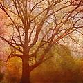 The Fairy Tree by Brett Pfister