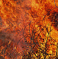 The Flames Of A Controlled Fire by Joel Sartore