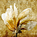 The Golden Magnolia by Andee Design
